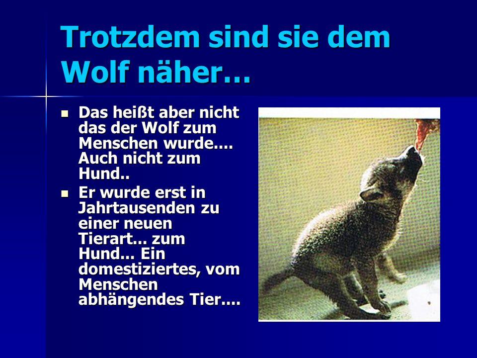 Trotzdem sind sie dem Wolf näher…