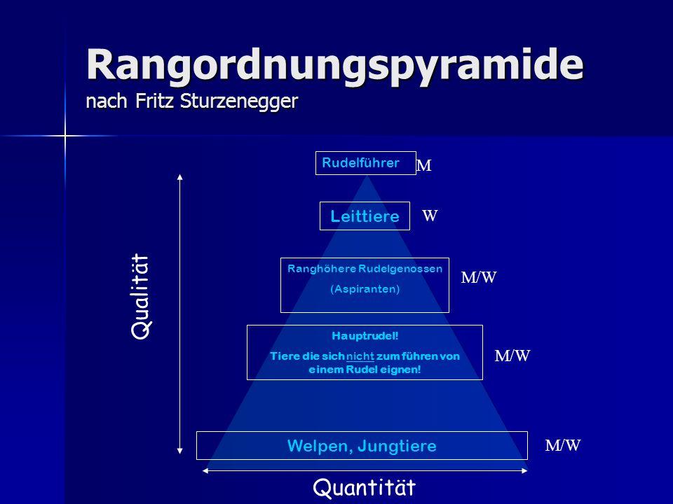Rangordnungspyramide nach Fritz Sturzenegger