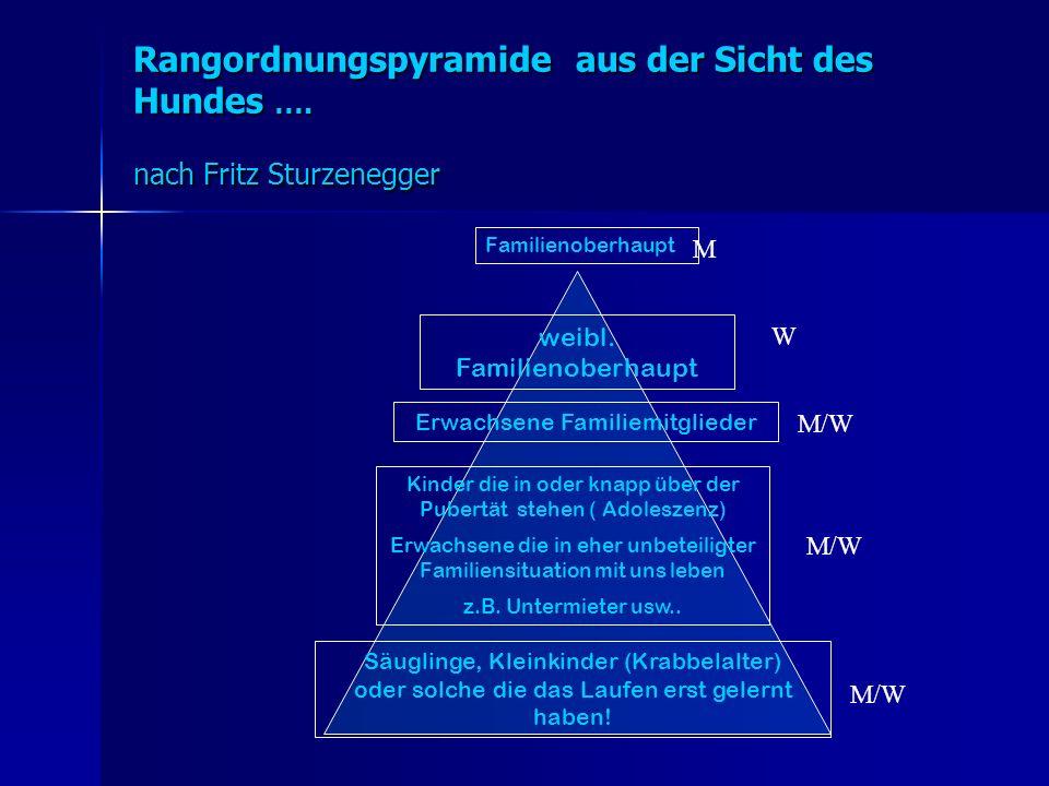 Rangordnungspyramide aus der Sicht des Hundes …