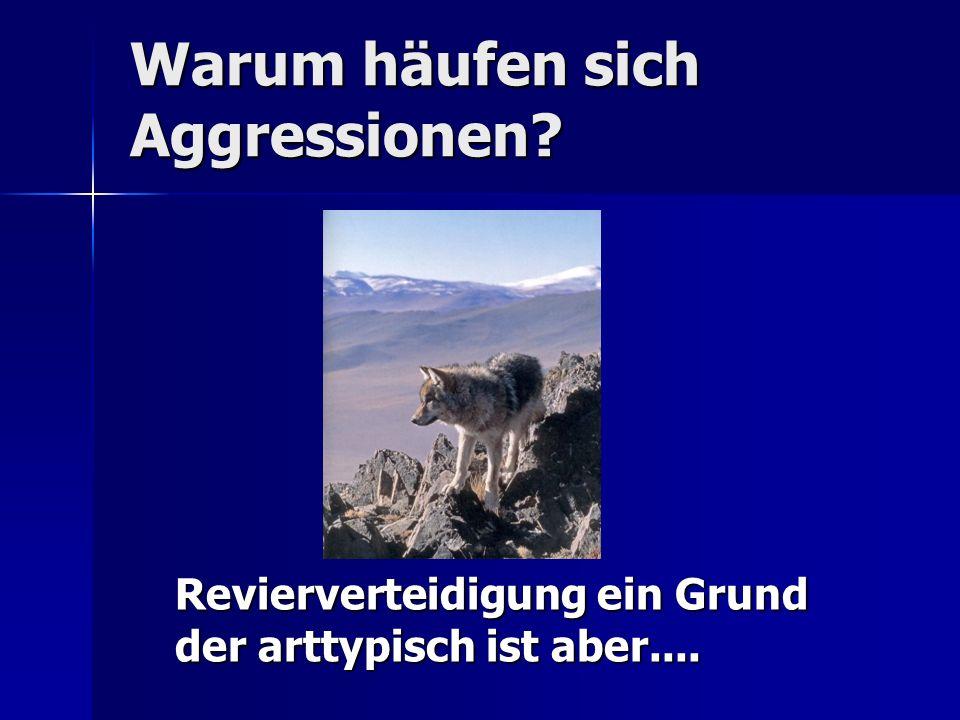 Warum häufen sich Aggressionen
