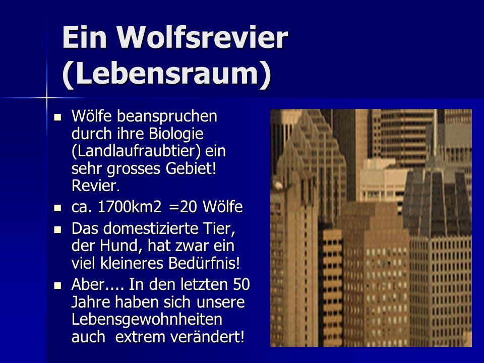 Ein Wolfsrevier (Lebensraum)