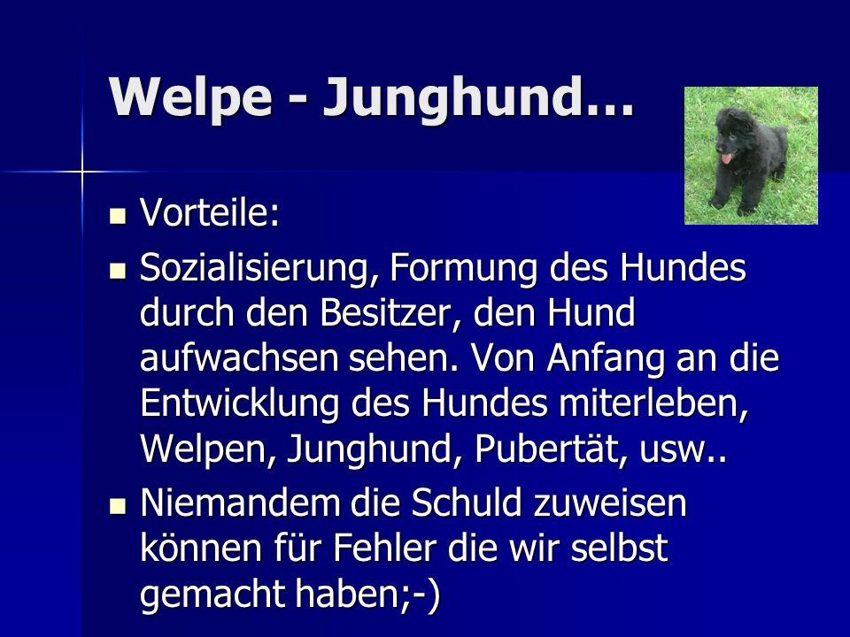 Welpe - Junghund… Vorteile: