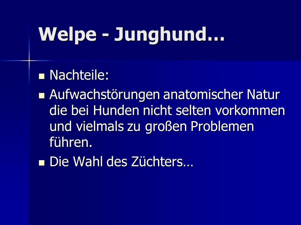 Welpe - Junghund… Nachteile: