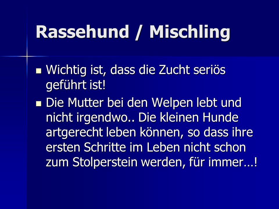 Rassehund / Mischling Wichtig ist, dass die Zucht seriös geführt ist!