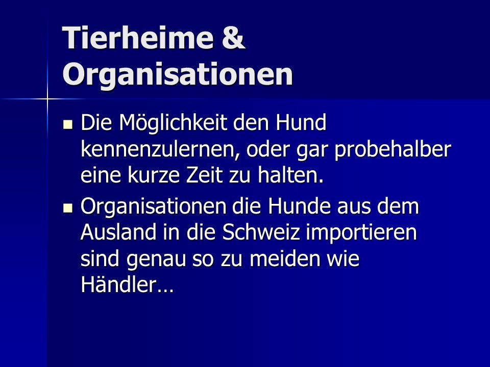 Tierheime & Organisationen