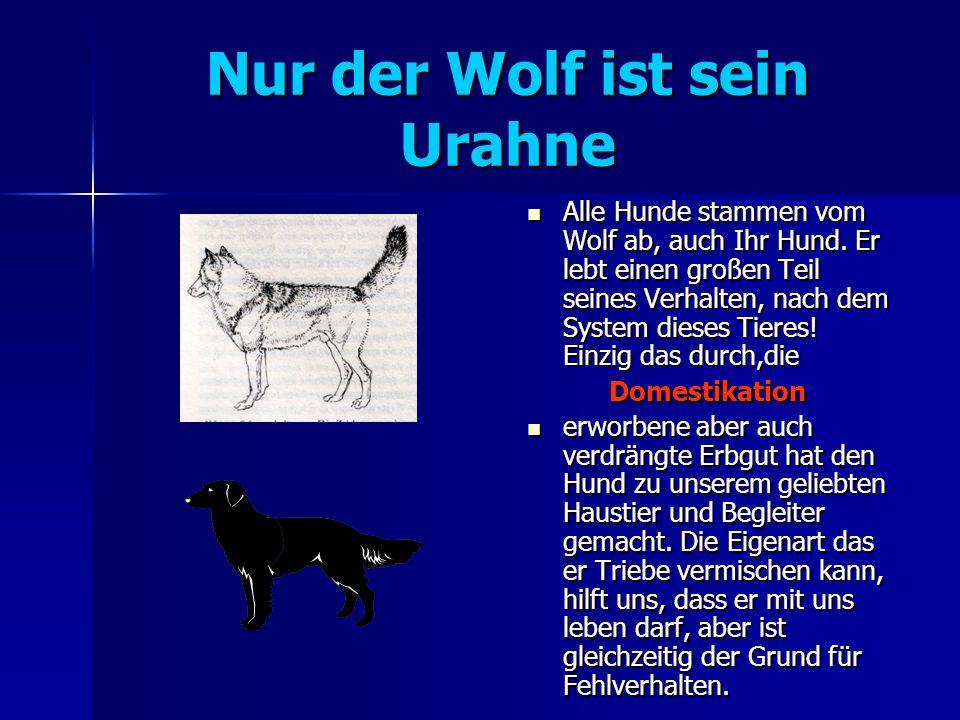 Nur der Wolf ist sein Urahne