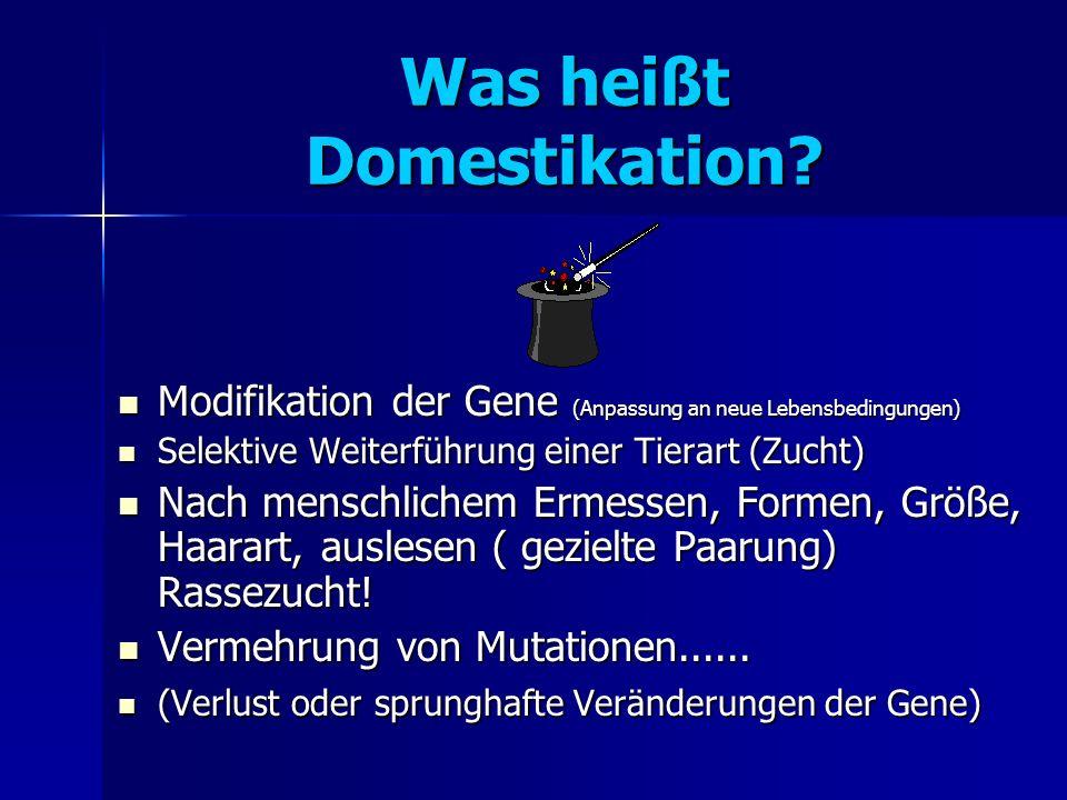 Was heißt Domestikation