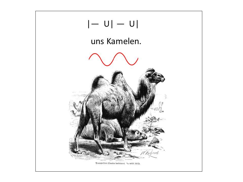 |— U| — U| uns Kamelen.