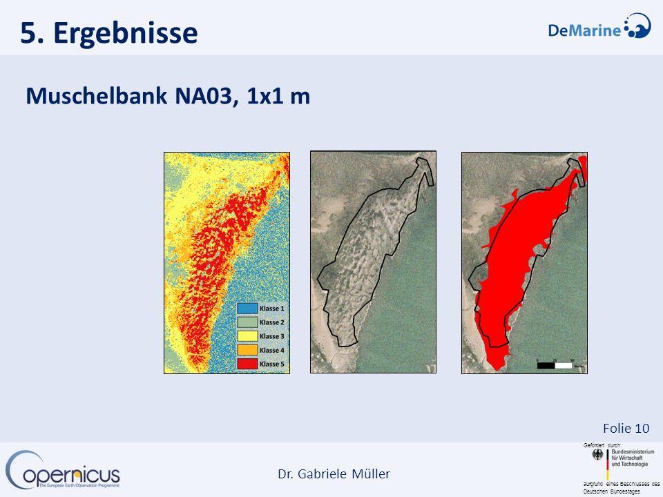 5. Ergebnisse Muschelbank NA03, 1x1 m
