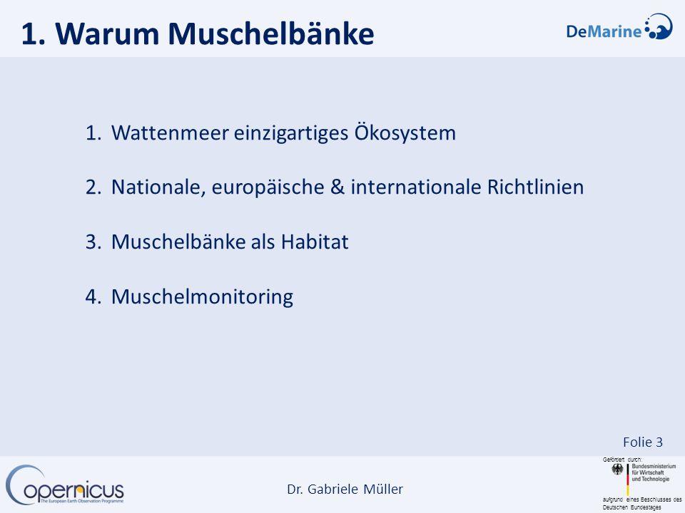 1. Warum Muschelbänke Wattenmeer einzigartiges Ökosystem