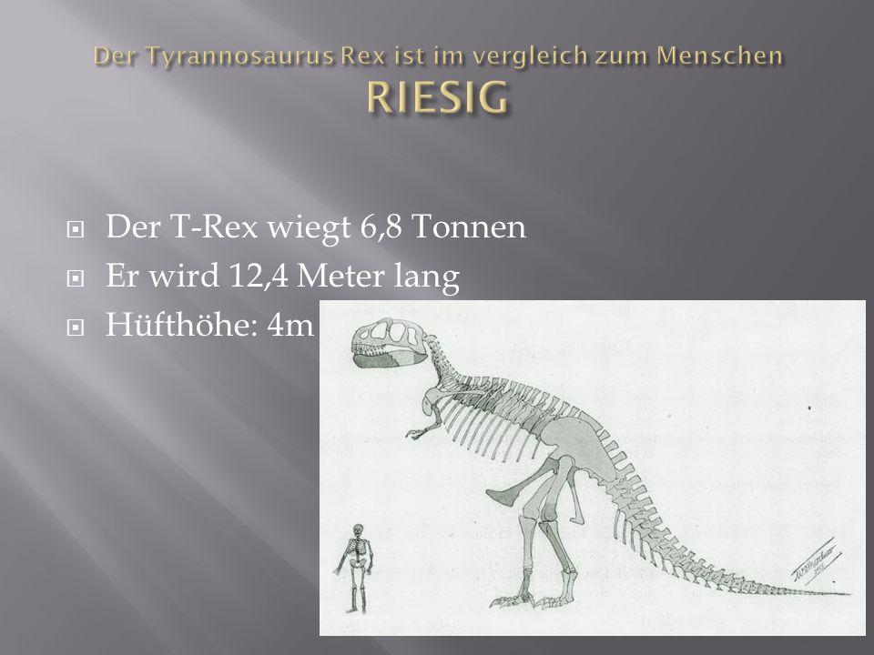 Der Tyrannosaurus Rex ist im vergleich zum Menschen RIESIG