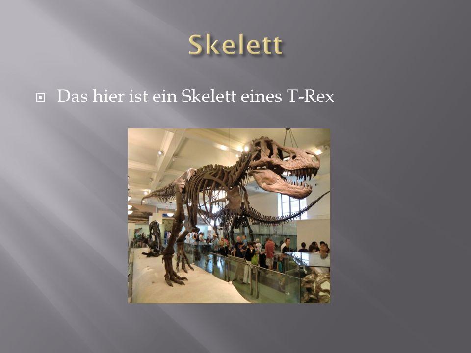 Skelett Das hier ist ein Skelett eines T-Rex Das hier ist das Skelett