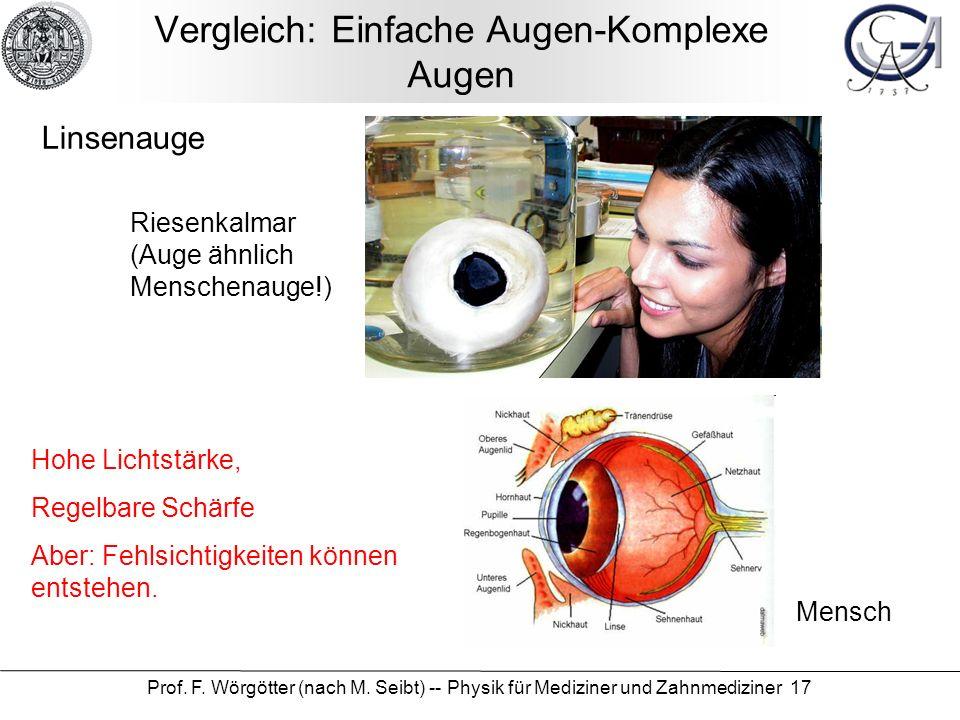 Vergleich: Einfache Augen-Komplexe Augen