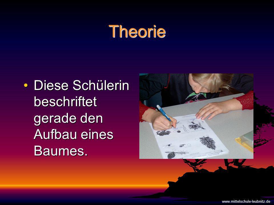 Theorie Diese Schülerin beschriftet gerade den Aufbau eines Baumes.
