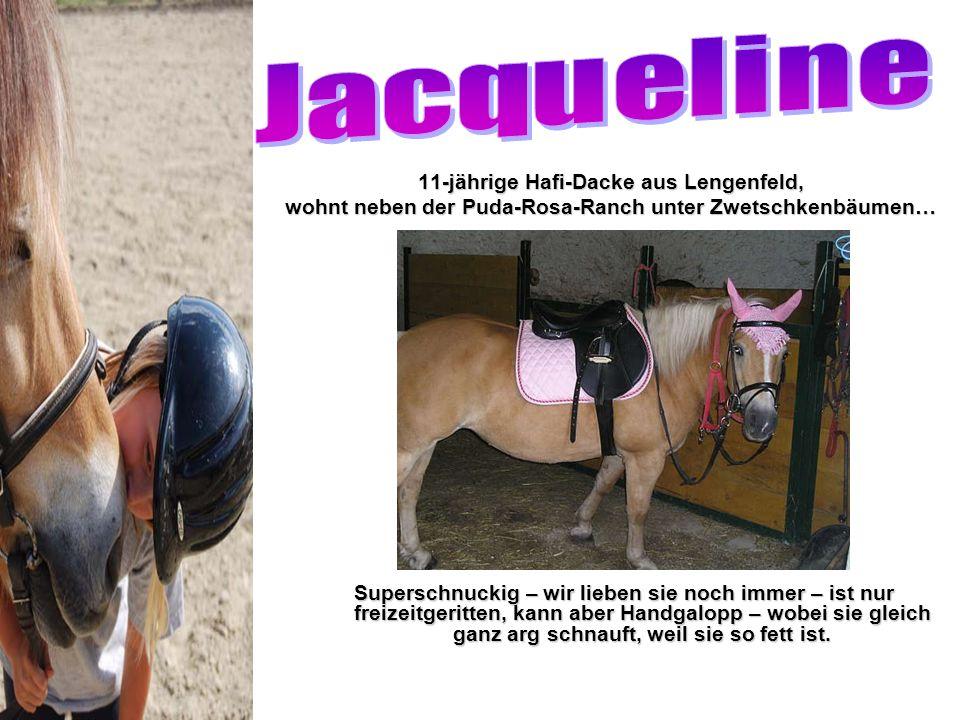 Jacqueline 11-jährige Hafi-Dacke aus Lengenfeld,