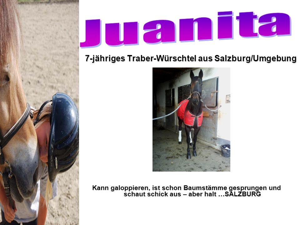 7-jähriges Traber-Würschtel aus Salzburg/Umgebung