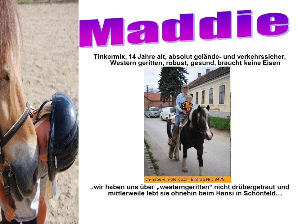 Maddie Tinkermix, 14 Jahre alt, absolut gelände- und verkehrssicher, Western geritten, robust, gesund, braucht keine Eisen.