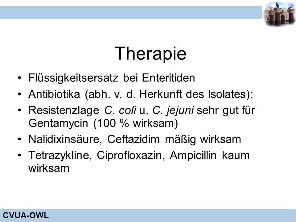 Therapie Flüssigkeitsersatz bei Enteritiden
