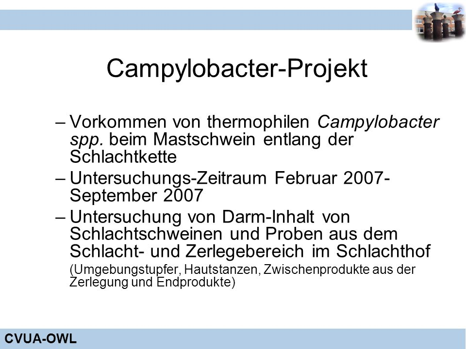 Campylobacter-Projekt