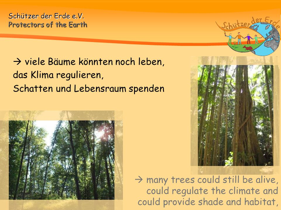  viele Bäume könnten noch leben,