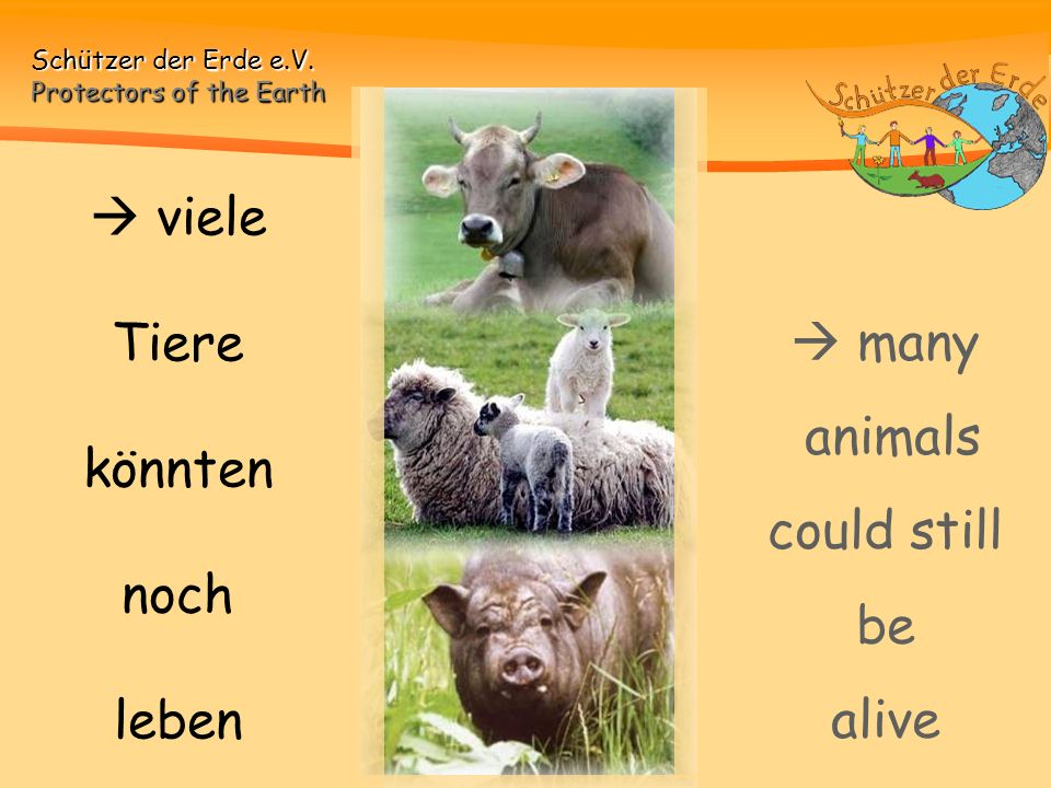  viele Tiere könnten noch leben  many animals could still be alive