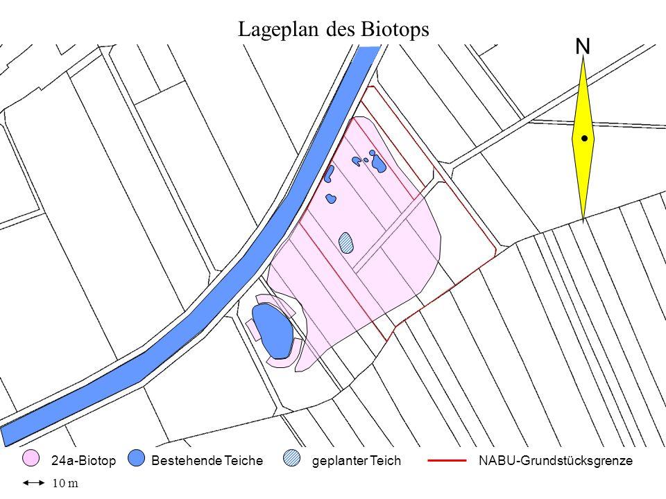 Lageplan des Biotops N 10 m 24a-Biotop Bestehende Teiche