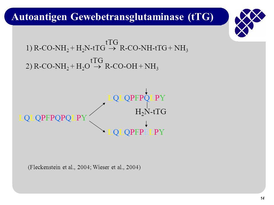 Autoantigen Gewebetransglutaminase (tTG)
