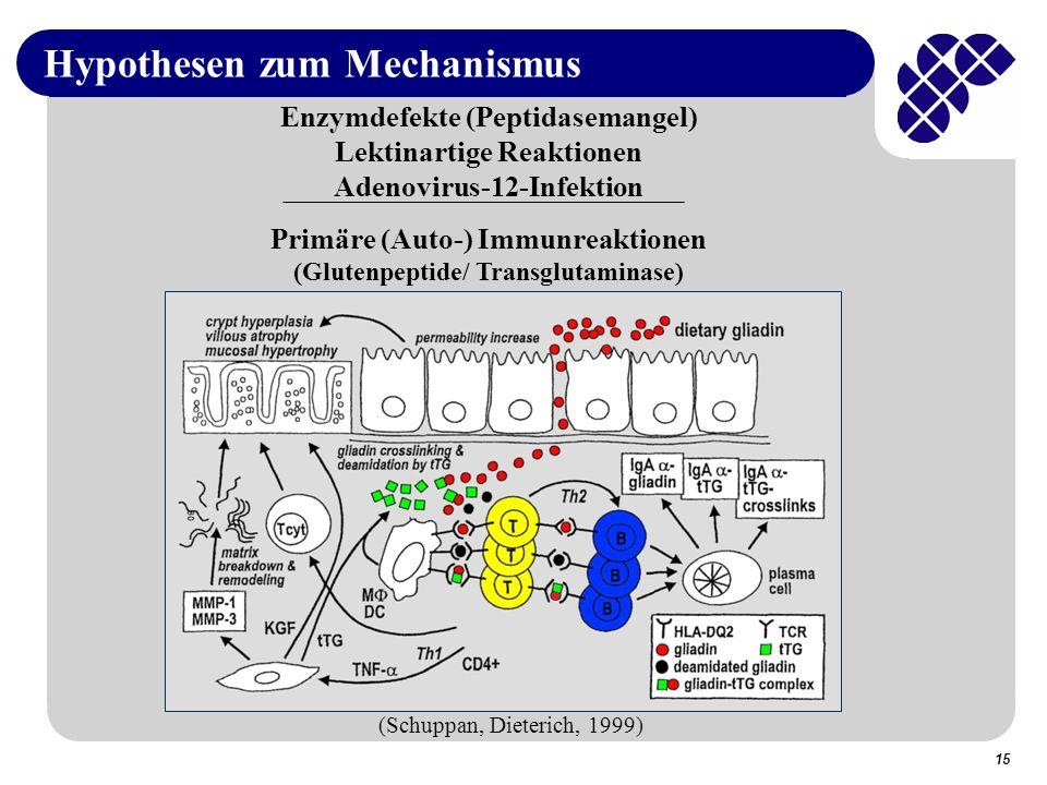 Hypothesen zum Mechanismus