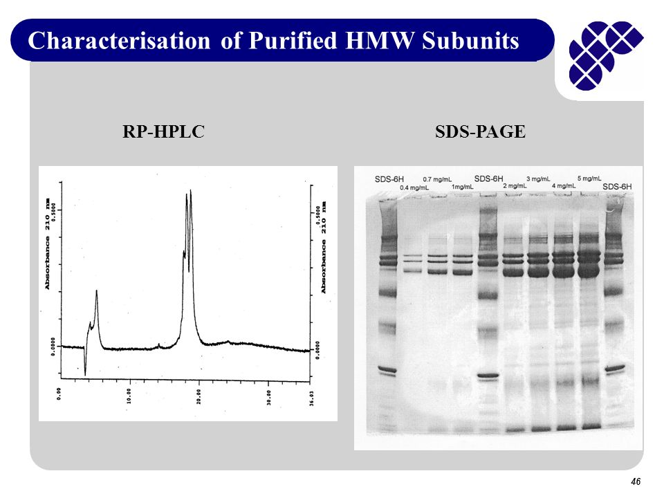 Characterisation of Purified HMW Subunits