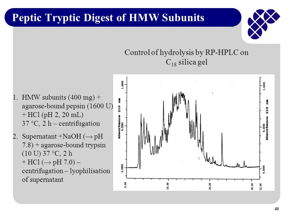 Peptic Tryptic Digest of HMW Subunits