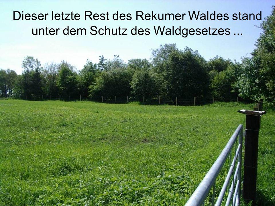 Dieser letzte Rest des Rekumer Waldes stand unter dem Schutz des Waldgesetzes ...