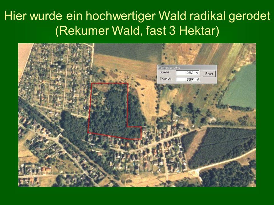 Hier wurde ein hochwertiger Wald radikal gerodet (Rekumer Wald, fast 3 Hektar)