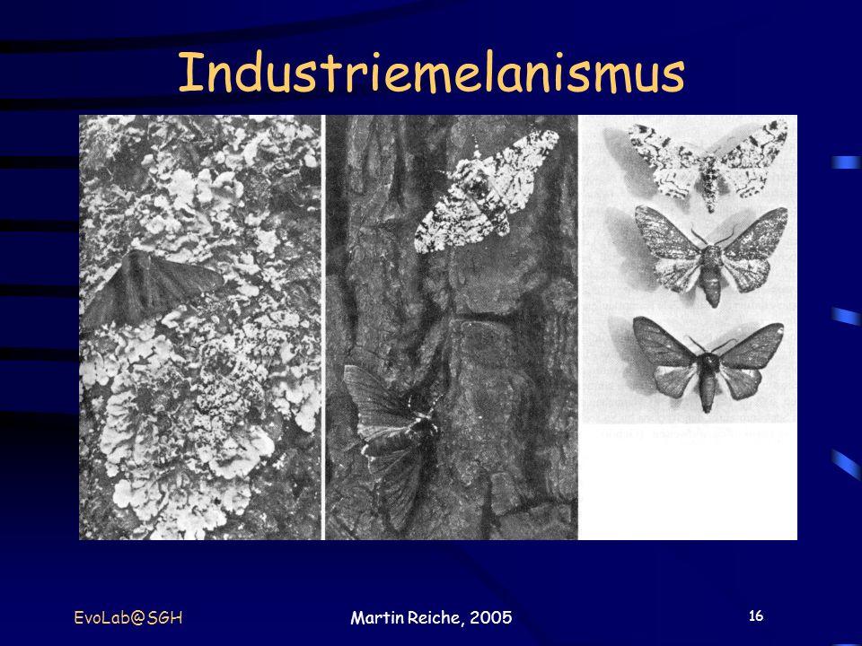 Industriemelanismus EvoLab@SGH Martin Reiche, 2005