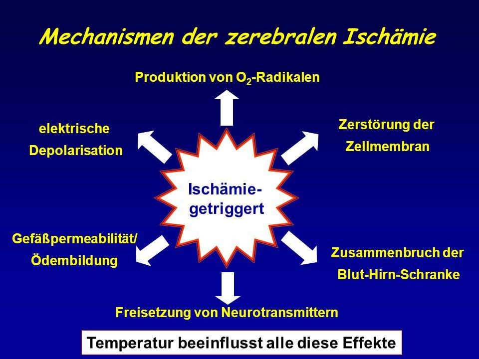 Mechanismen der zerebralen Ischämie