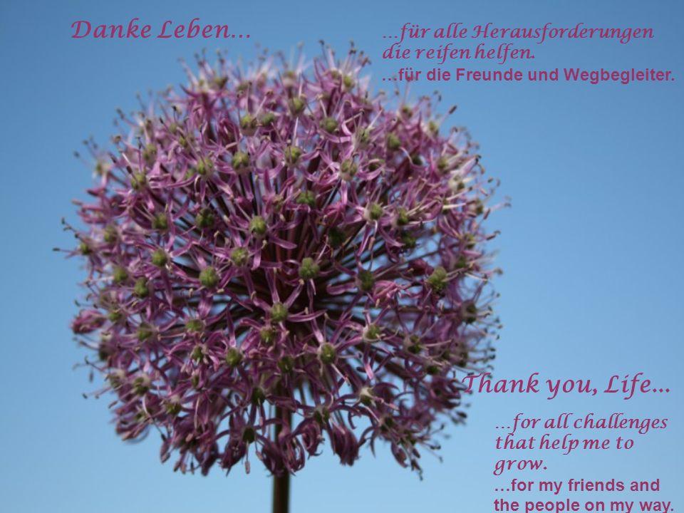 Danke Leben… Thank you, Life... …für alle Herausforderungen