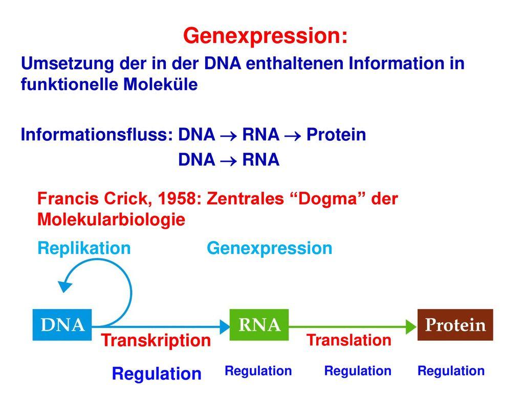 palindromische sequenzen molekularbiologie