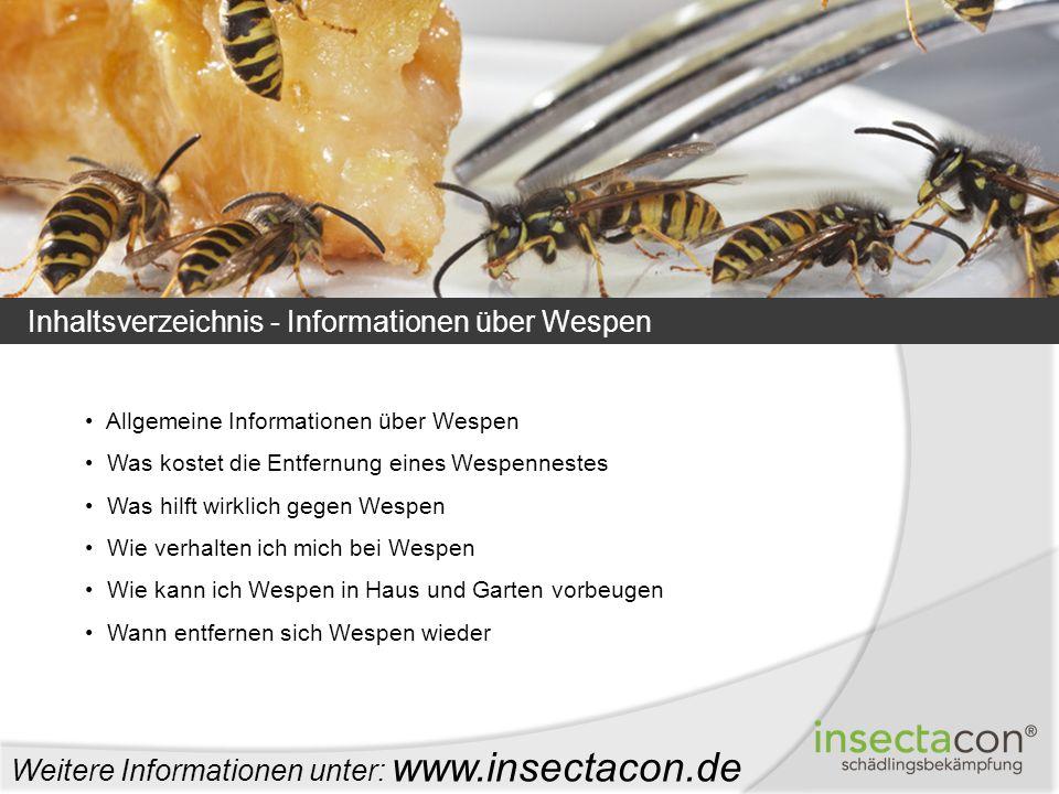 Inhaltsverzeichnis - Informationen über Wespen