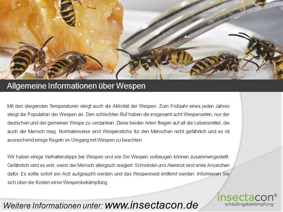 Allgemeine Informationen über Wespen