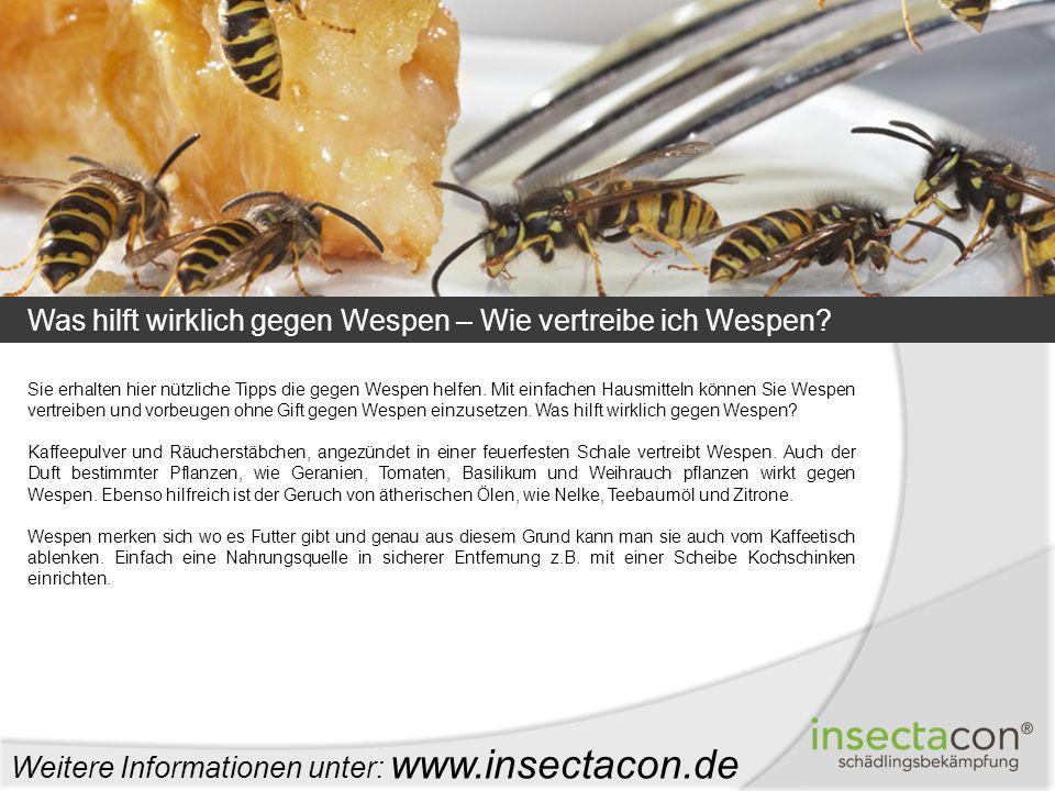 Was hilft wirklich gegen Wespen – Wie vertreibe ich Wespen