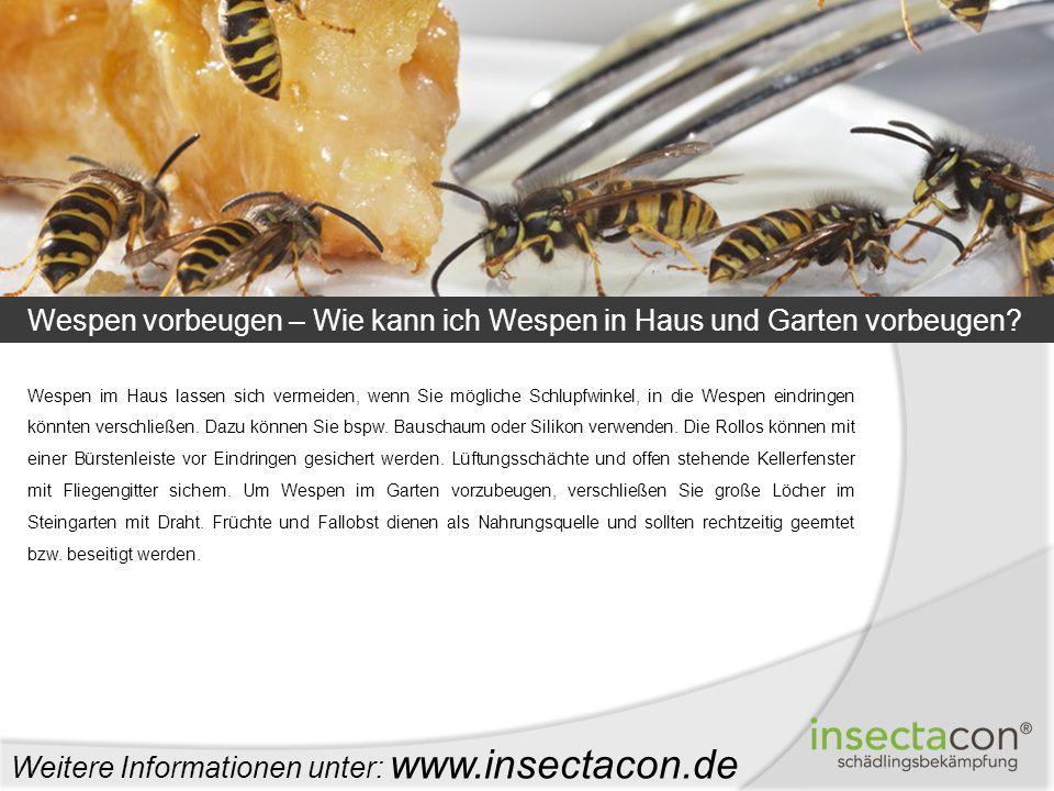 Wespen vorbeugen – Wie kann ich Wespen in Haus und Garten vorbeugen