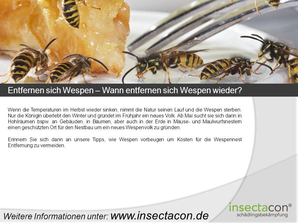 Entfernen sich Wespen – Wann entfernen sich Wespen wieder