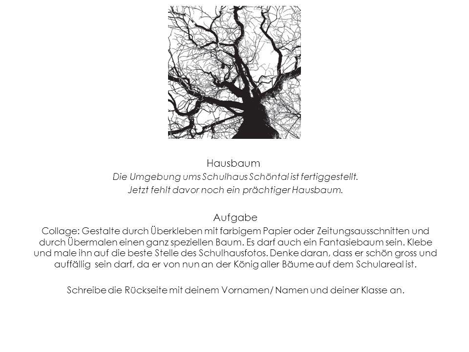 Hausbaum Die Umgebung ums Schulhaus Schöntal ist fertiggestellt. Jetzt fehlt davor noch ein prächtiger Hausbaum.