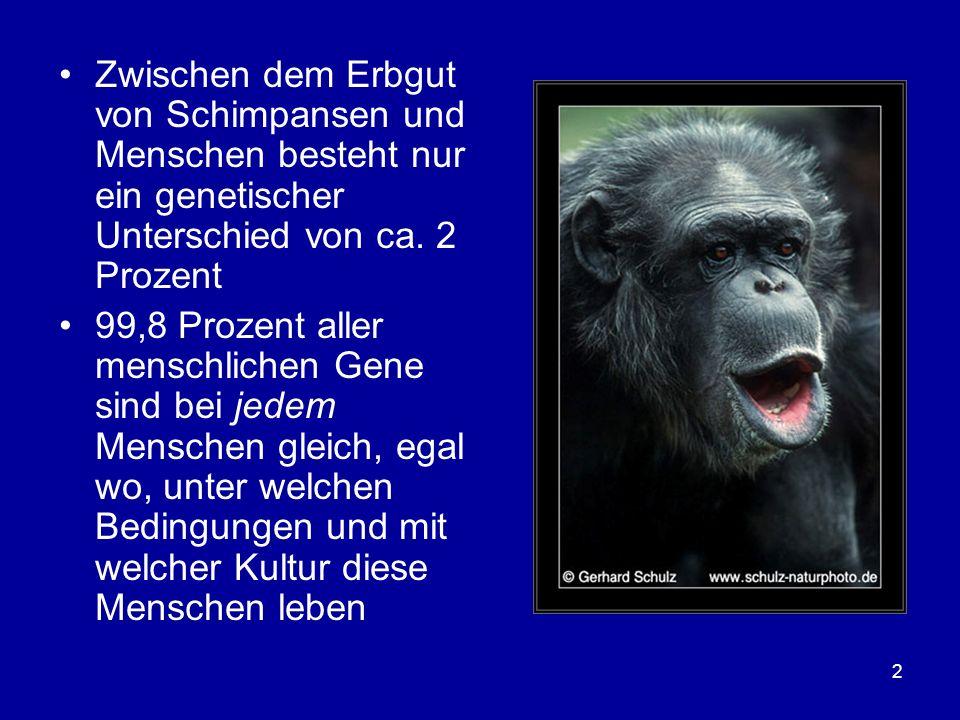 Zwischen dem Erbgut von Schimpansen und Menschen besteht nur ein genetischer Unterschied von ca. 2 Prozent