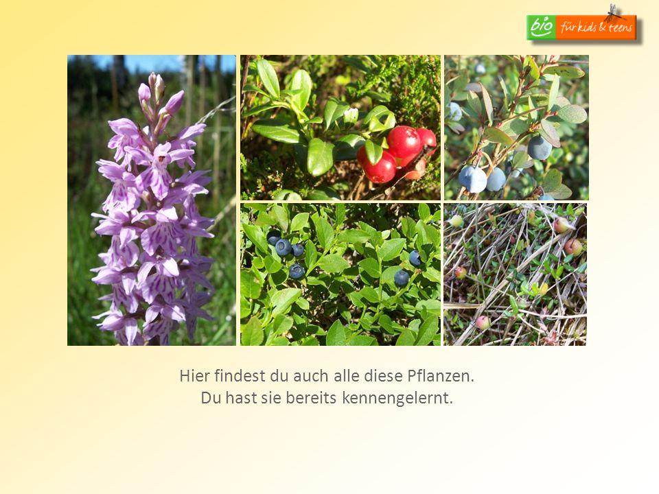Hier findest du auch alle diese Pflanzen.