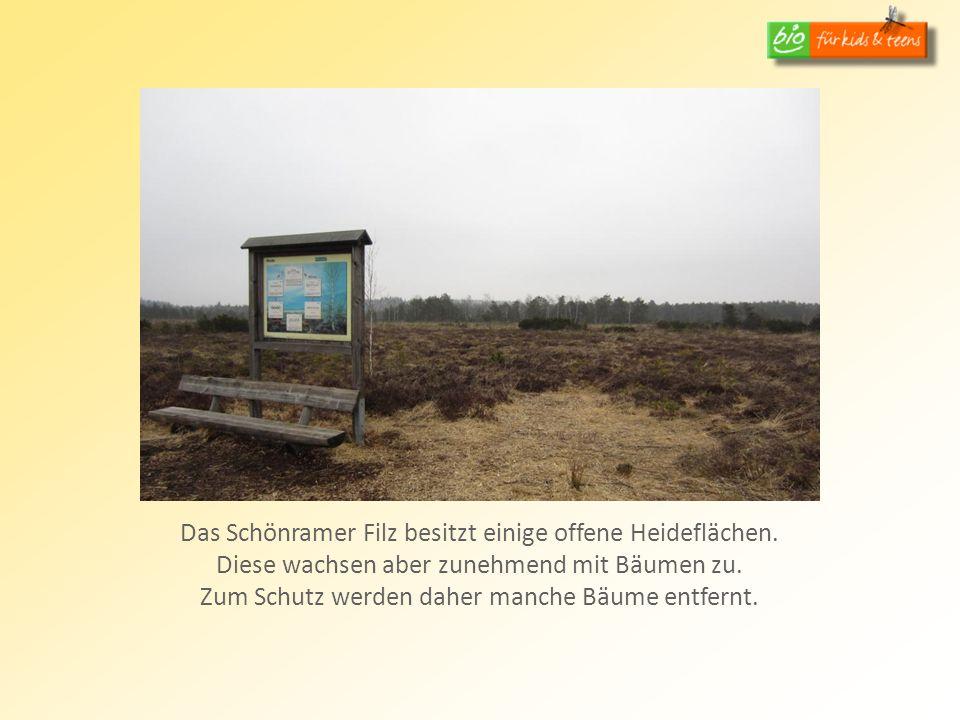 Das Schönramer Filz besitzt einige offene Heideflächen