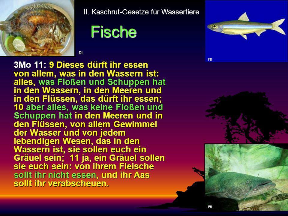 II. Kaschrut-Gesetze für Wassertiere