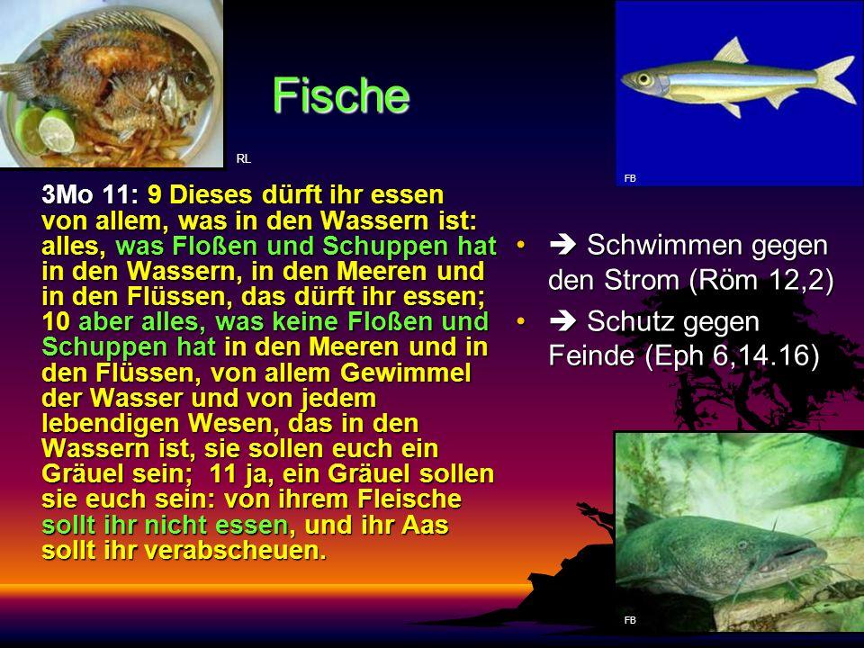 Fische  Schwimmen gegen den Strom (Röm 12,2)