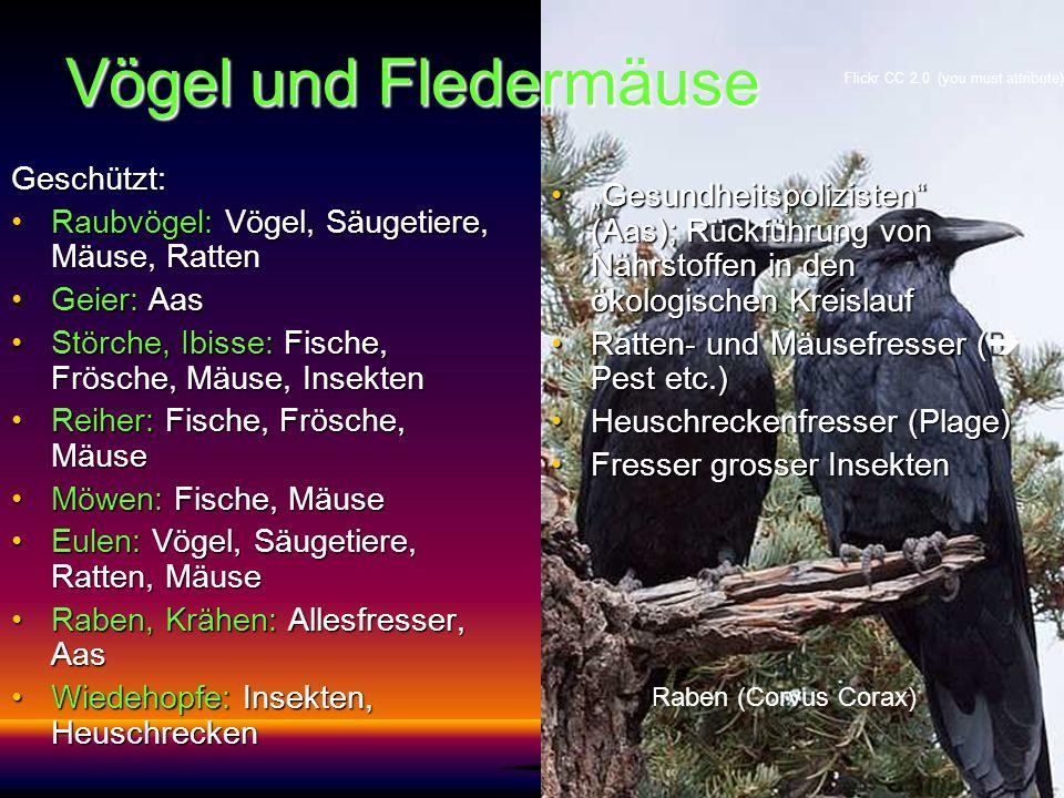 Vögel und Fledermäuse Geschützt: