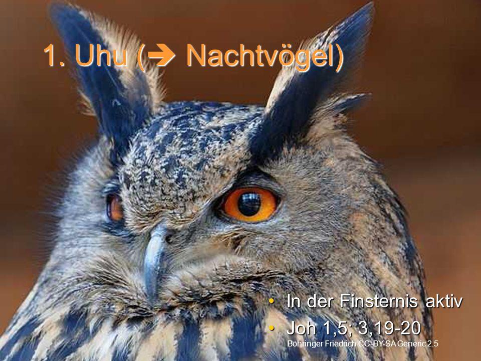 1. Uhu ( Nachtvögel) In der Finsternis aktiv Joh 1,5; 3,19-20