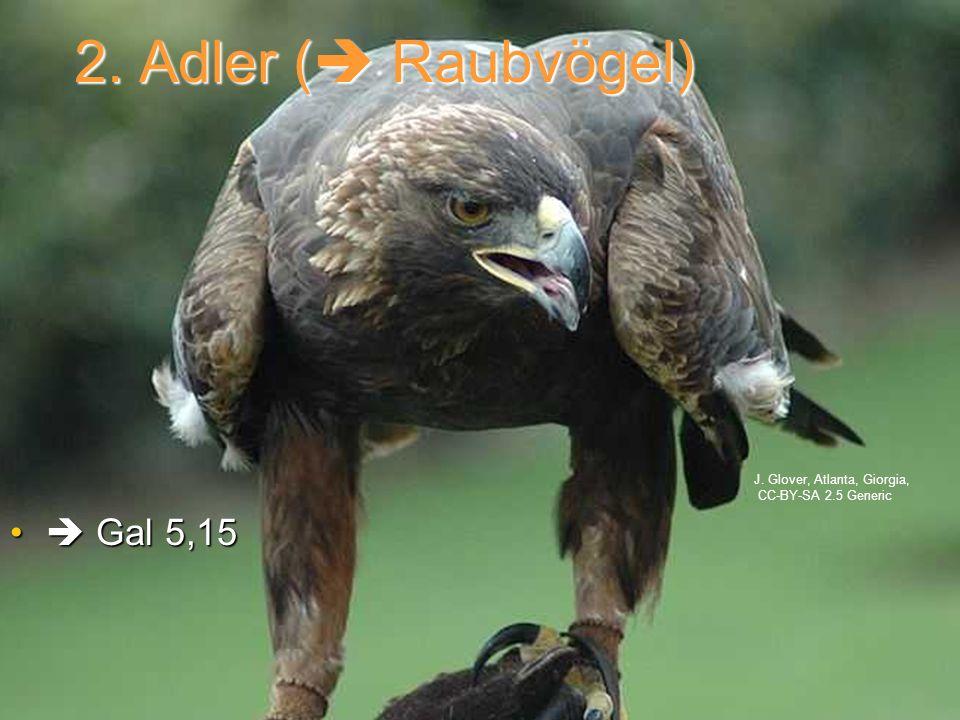 2. Adler ( Raubvögel)  Gal 5,15 J. Glover, Atlanta, Giorgia,